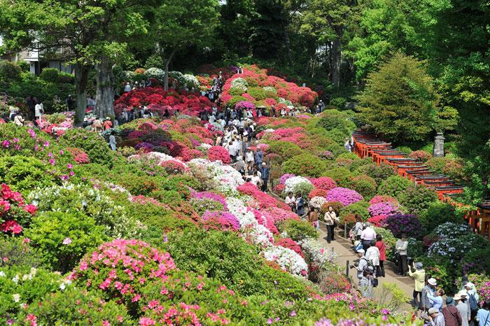 根津神社 つつじ祭り(写真提供:TCVB)