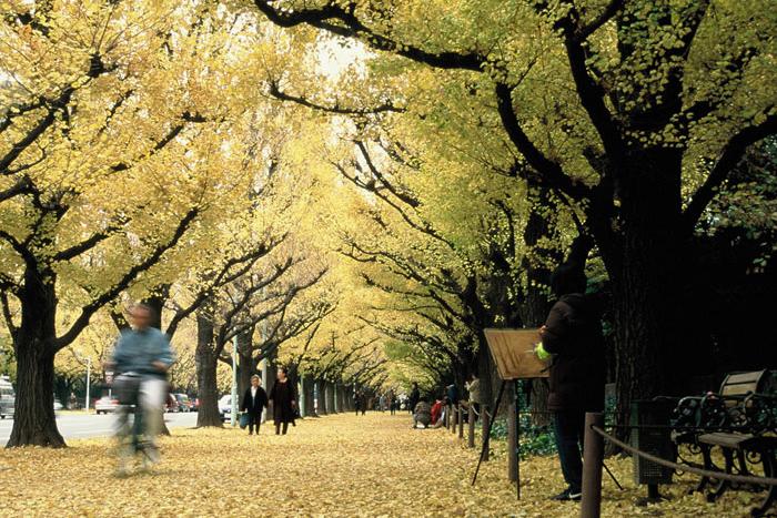 神宮外苑 いちょう並木