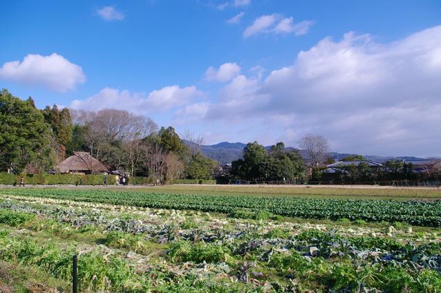 嵯峨野・嵐山 奥の茅葺き屋根は落柿舎