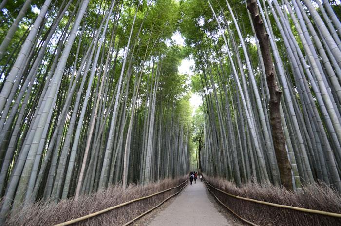 嵯峨野・嵐山 天龍寺裏の竹林
