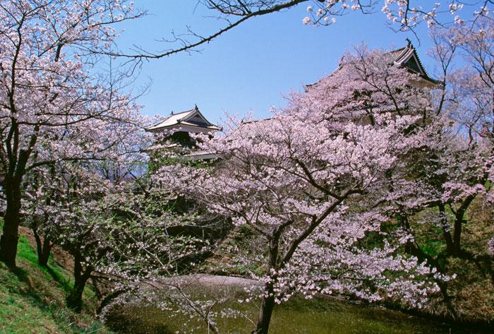 上田城跡公園の桜(写真提供:長野県観光機構)