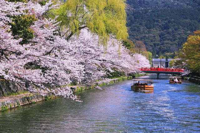 琵琶湖疏水 春には岡崎十石舟めぐりという遊覧船がでる。