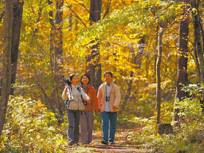 野鳥の森ネイチャーウォッチング(写真提供:長野県観光機構)