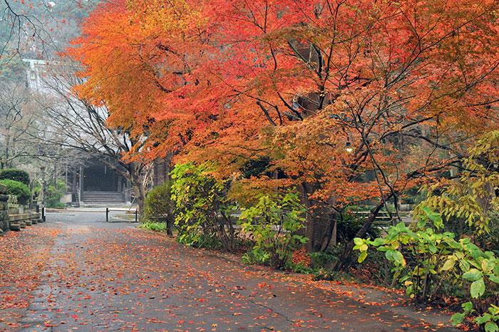 妙本寺の紅葉(写真提供:鎌倉観光協会)