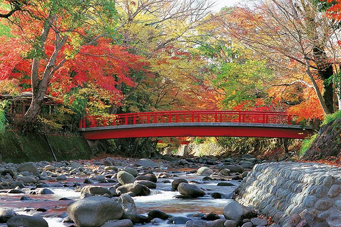 修善寺桂川 楓橋(写真提供:静岡県観光協会)
