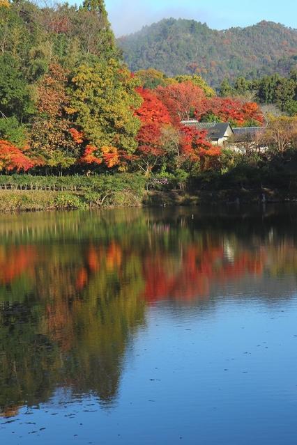 小倉池の紅葉(写真提供:Photolibrary)