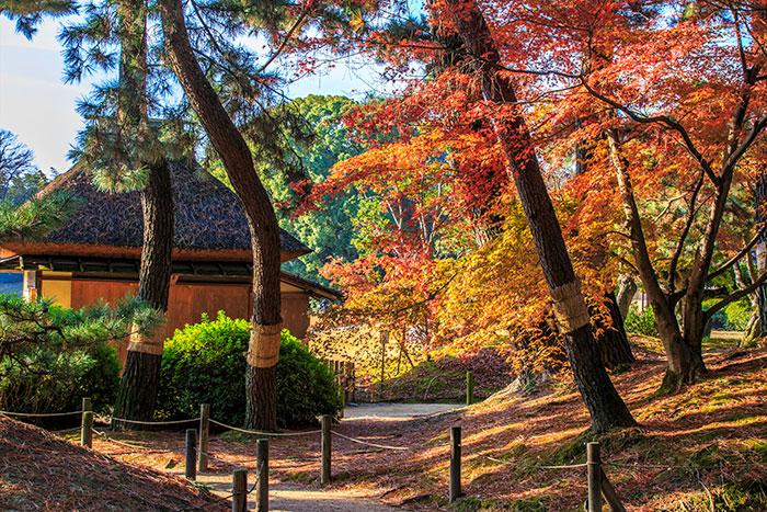 岡山後楽園の紅葉(写真提供:岡山県観光連盟)
