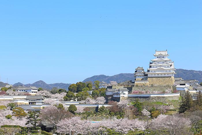 春の姫路城(写真提供:姫路市)