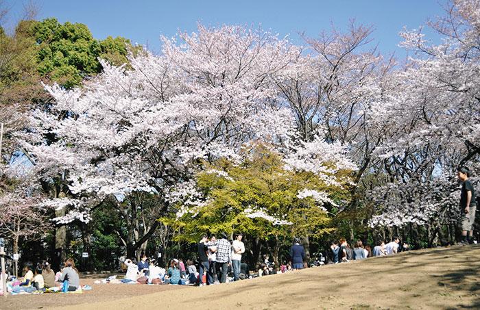 飛鳥山公園のさくら(写真提供:東京北区)