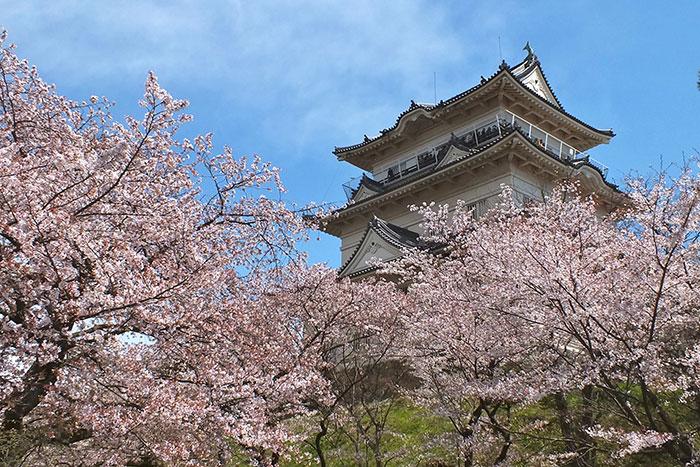 春の小田原城(写真提供:神奈川県観光協会)
